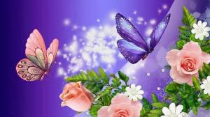 papillons_n