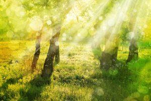 Rayons de soleil_o