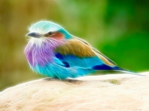 oiseau blessé