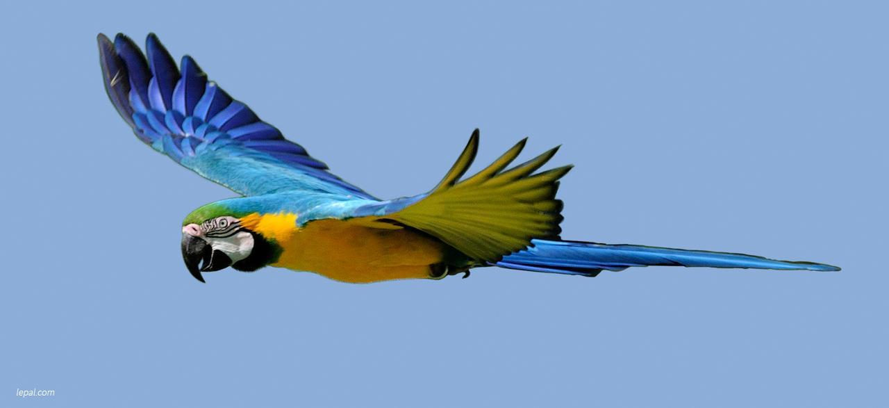 Un vol d oiseau louise hudon - Jeux d oiseau qui vole ...
