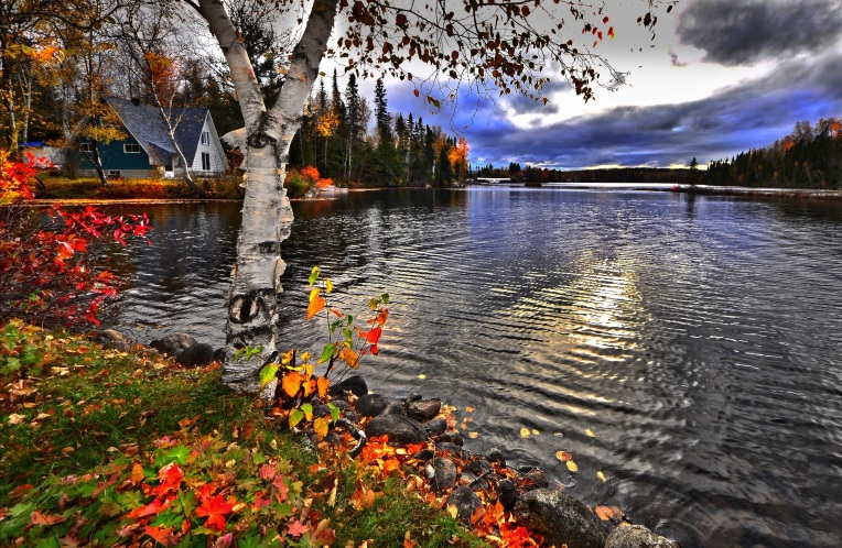 landscape-tree-water-plant-leaf-fall-663027-pxhere.com