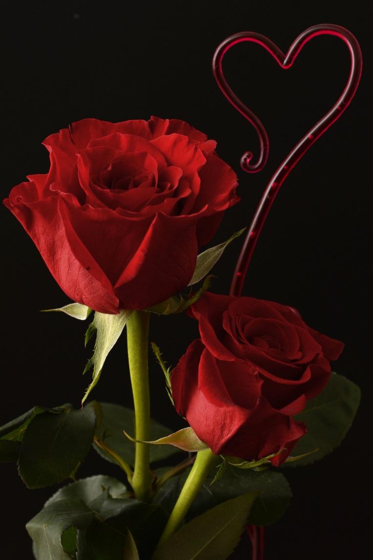 carte-de-voeux-gratuites-saint-valentin-fleurs-roses-rouges-1