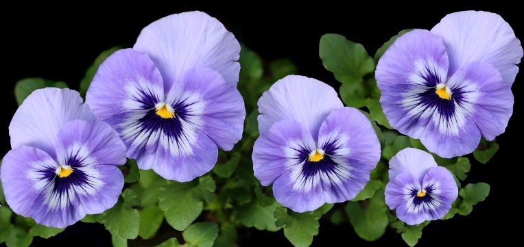 flowers-4199586_1920