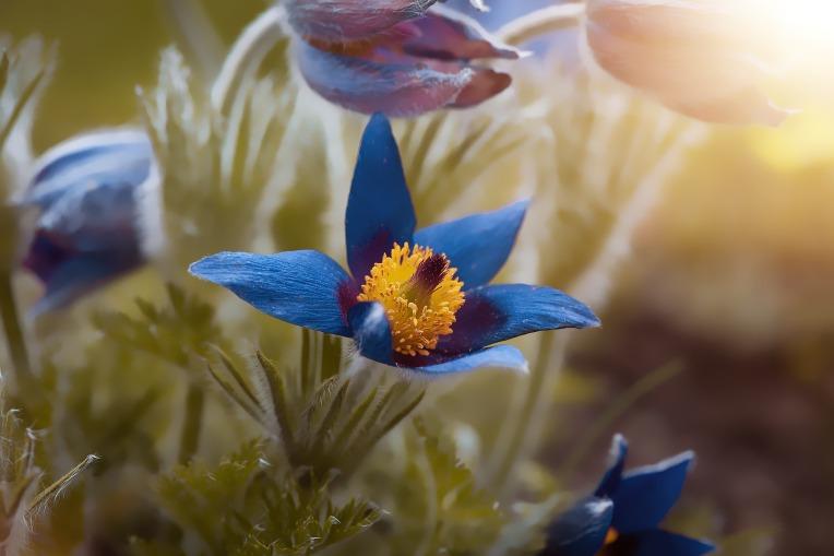 anemone-4196064_1920