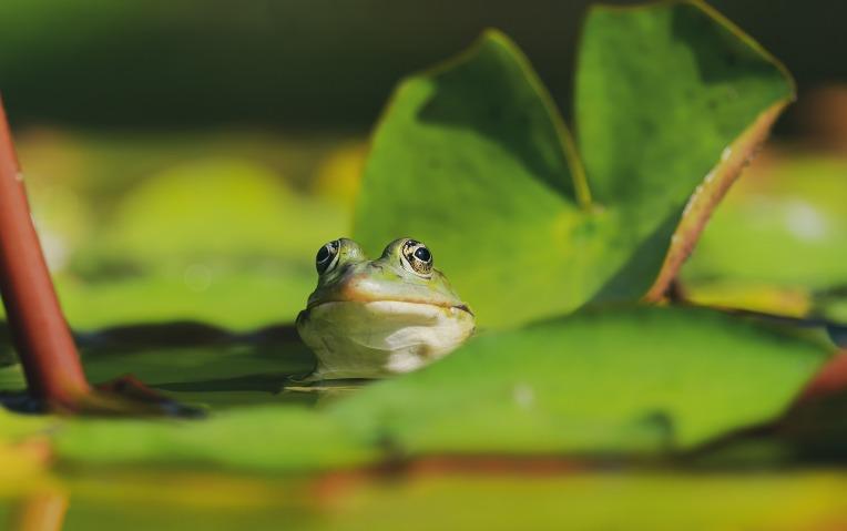 frog-4296784_1920