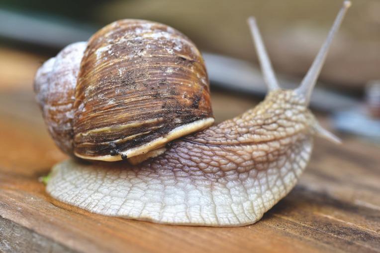 snail-4333975_1920
