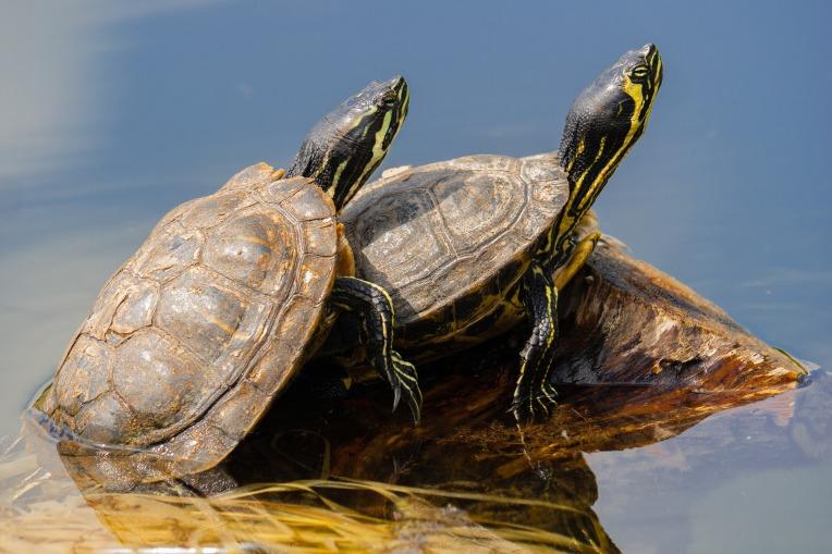 turtles-4310906_1920