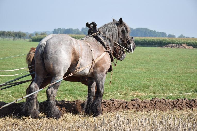 horse-4443454_1920